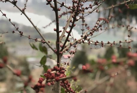 Yuanba Tiantai Mountain