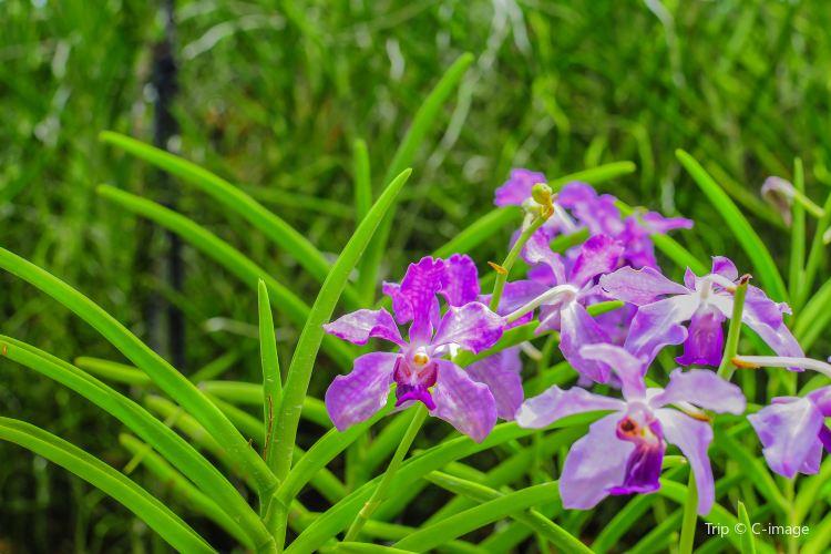 Orchidville