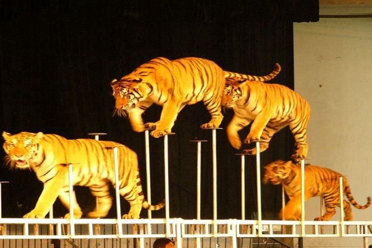 九峰森林動物園3