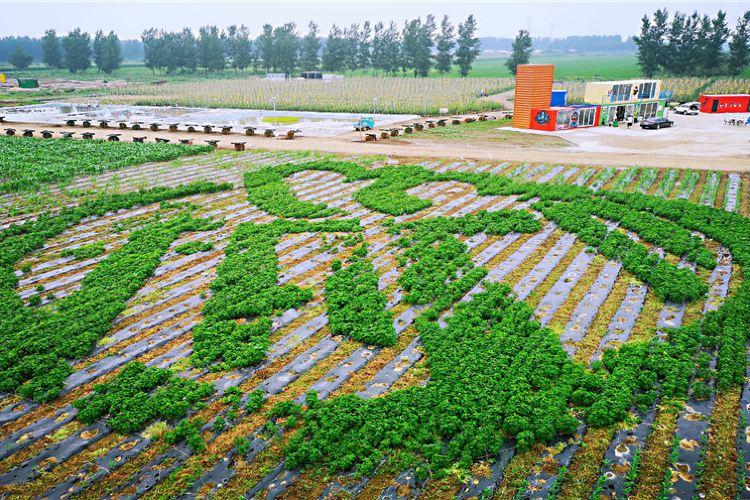 선양 바오다오 아미족 열대농업 박람원