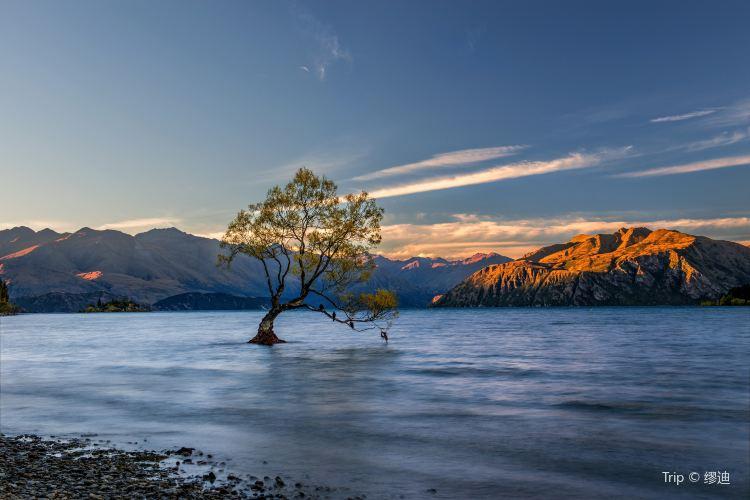 That Wanaka Tree1