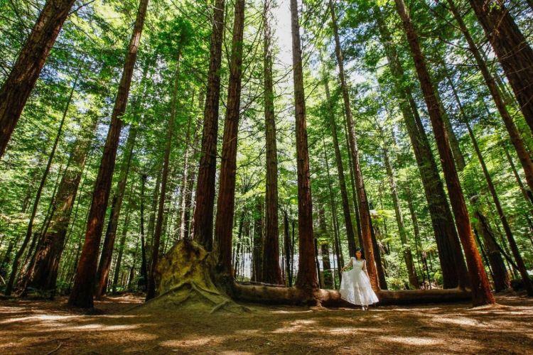 紅木森林公園1