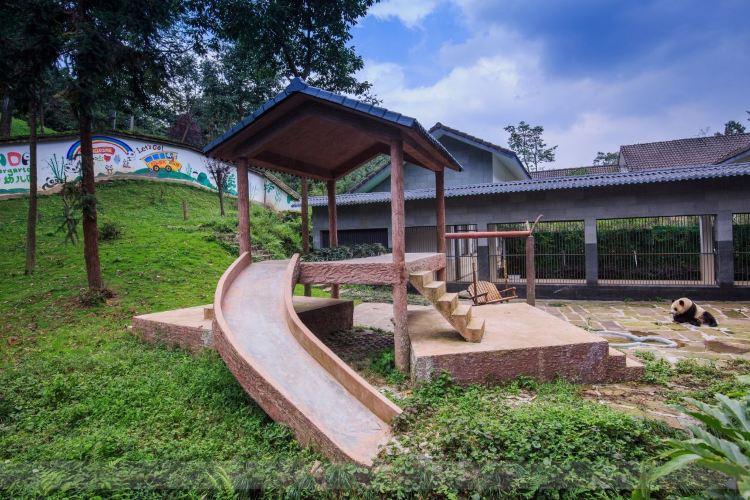 Bifengxia Panda Reserve4
