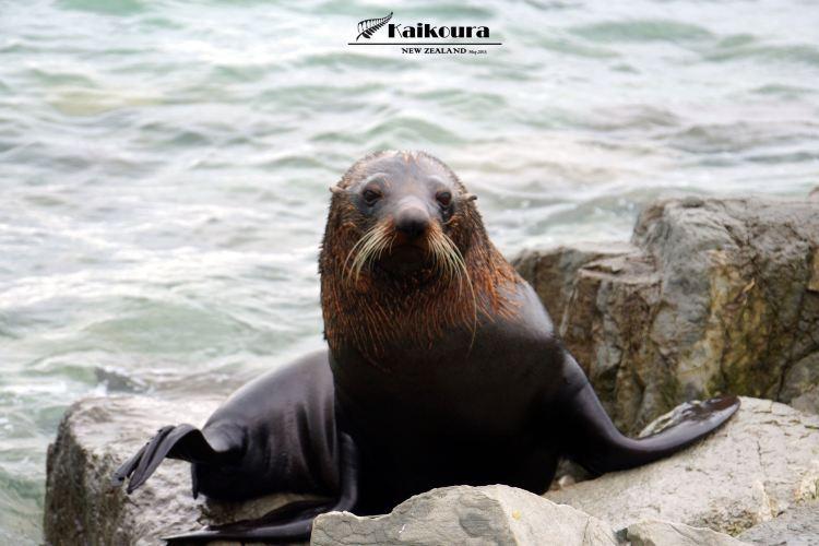 海豹棲息地1