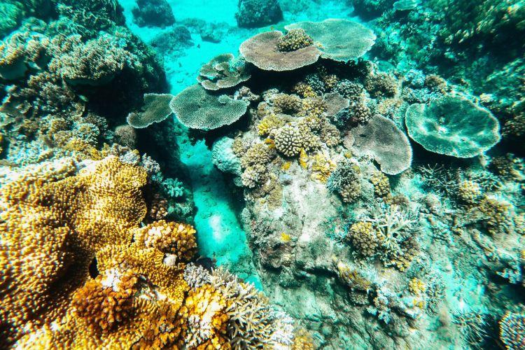 Apo Island2