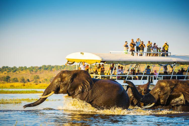 Chobe National Park1