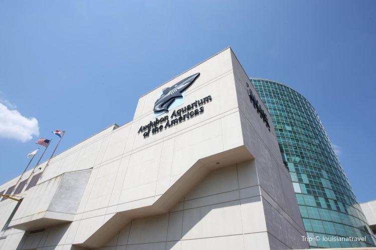 Audubon Aquarium of the Americas3