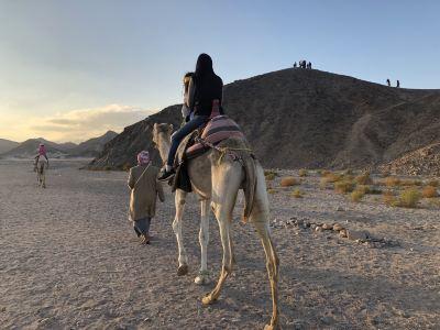 Habiba Horse