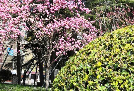 Renhou Park