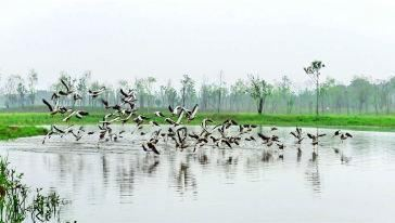 Yangshahu National Wetland Park2