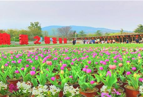 The Flower Expo Park of Bangbu