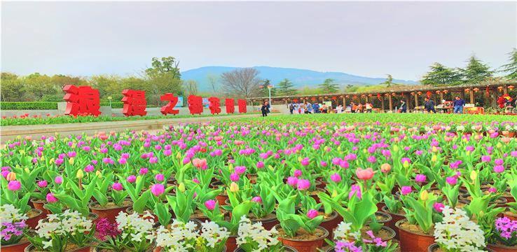 The Flower Expo Park of Bangbu