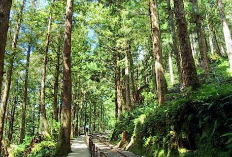 Taipingshan Forest Recreation Area