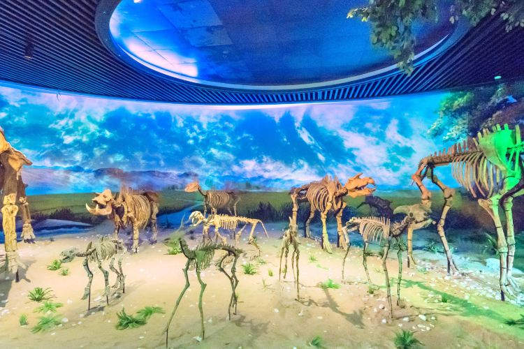 Geological Museum of Anhui
