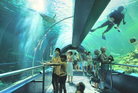 Underwater World SEA LIFE Aquarium Mooloolaba