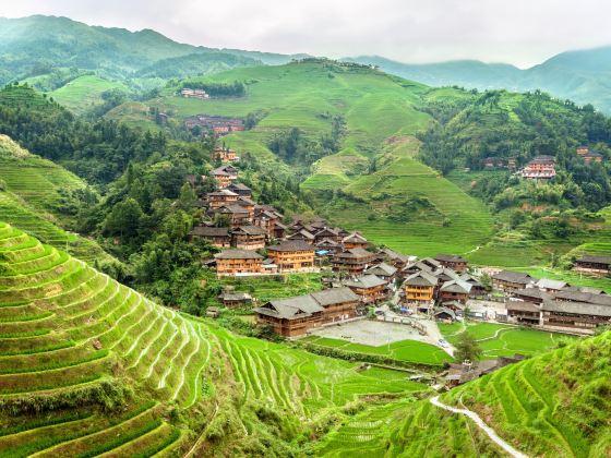 Longji Dazhai Terraces