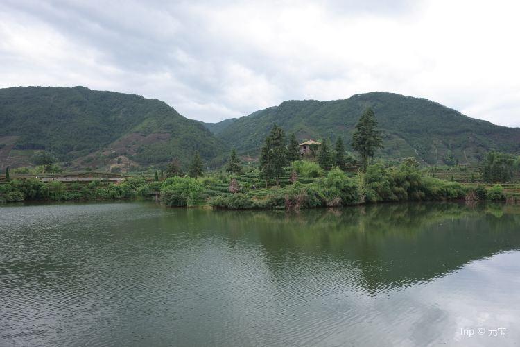 大木山茶園景區4