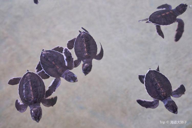 海龜孵化場4