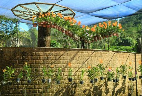 Nantianredai Botanical Garden