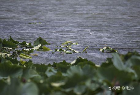 Yangcheng Lake Lotus Island