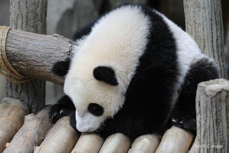 네가라 동물원3