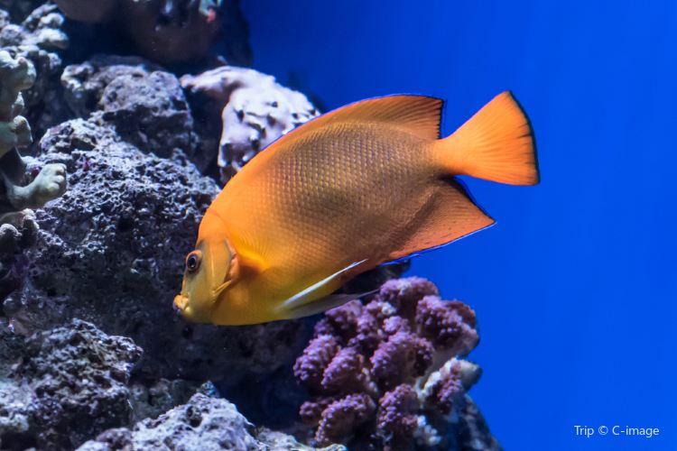 The Aquarium of the Pacific2