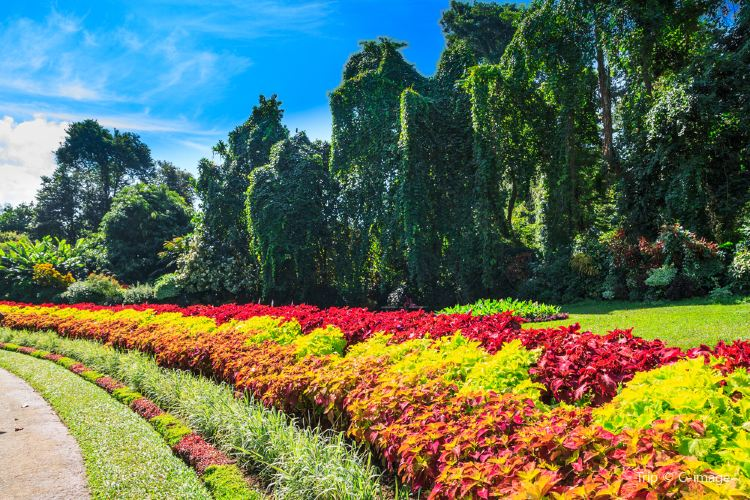 Botanical Garden (Botanischer Garten)4
