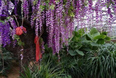 Lingzhu Mountain Botanical Garden