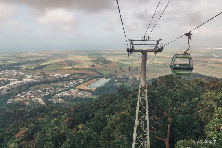 Skyrail Rainforest Cableway1