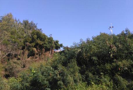 Yilan Datong Yulan Tea Garden