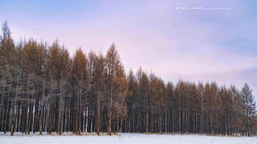 烏爾其漢森林公園