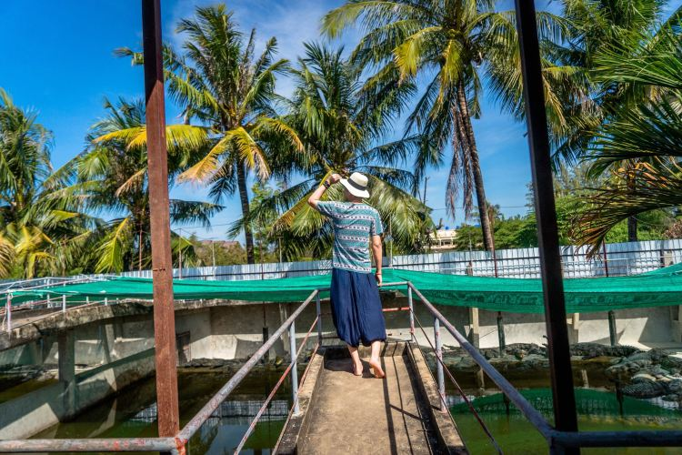Battambang Crocodile Farm1
