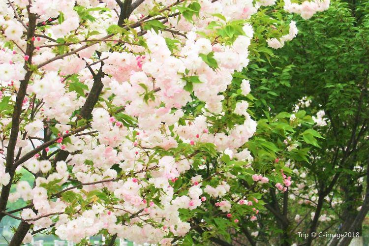Nanguo Peach Garden1
