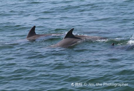Dolphin Watch Charters