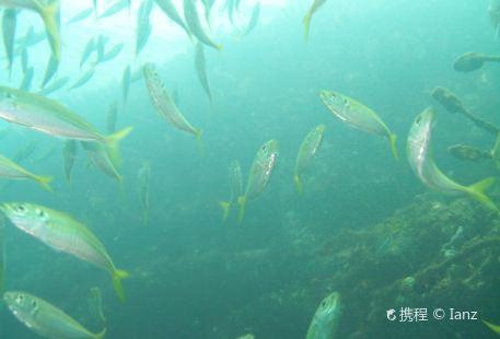 St. Croix Ultimate Bluewater Adventures (SCUBA), Inc.
