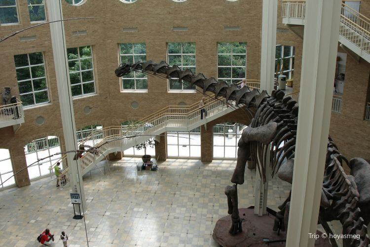 Fernbank Museum of Natural History4