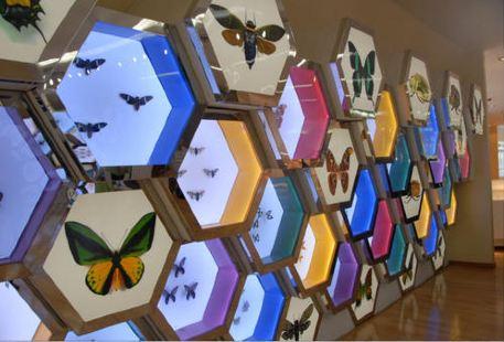 華希昆蟲博物館