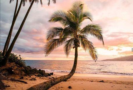 Maui Island Surfing Experience