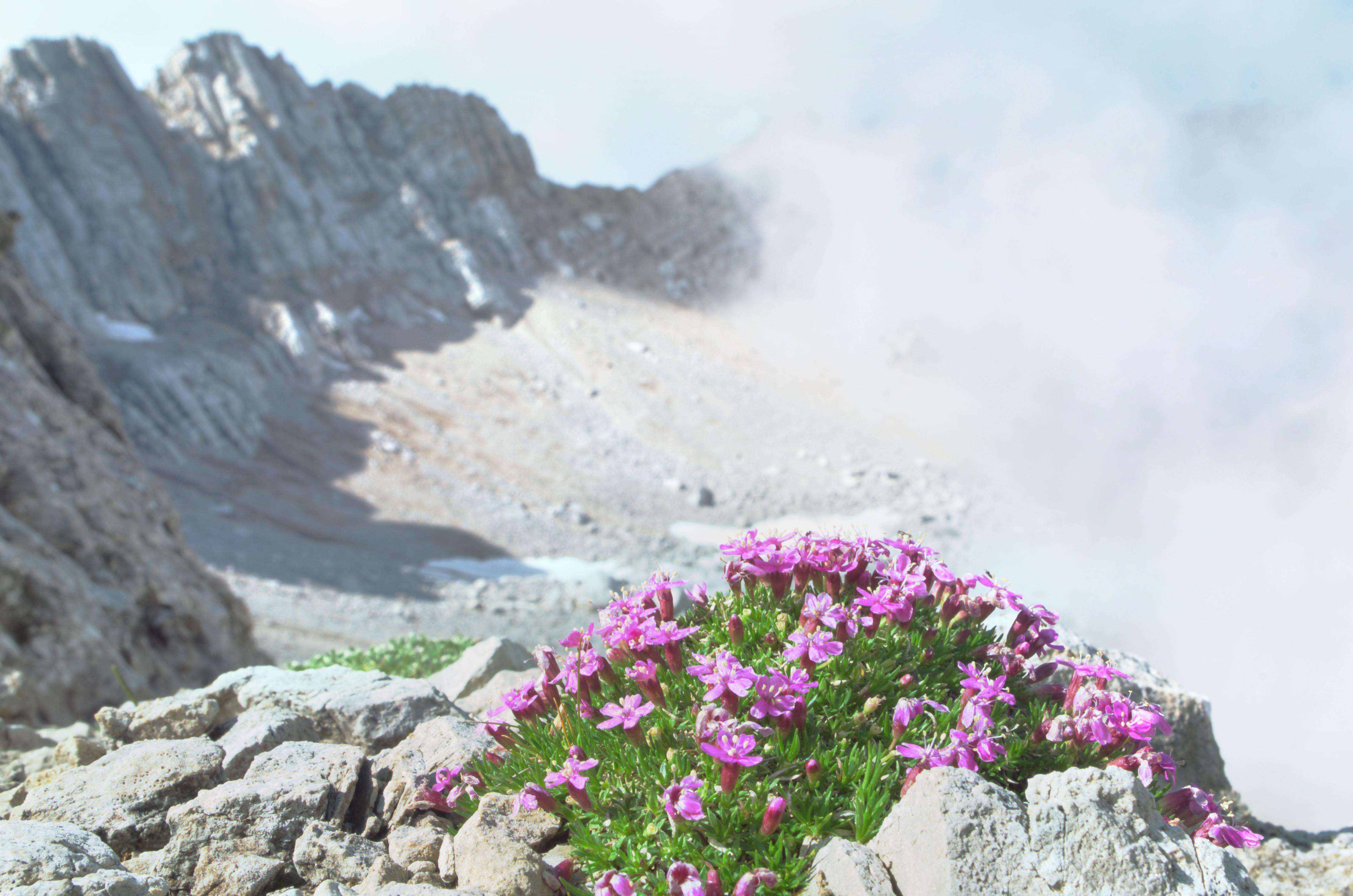 The Arctic Alpine Botanic Garden