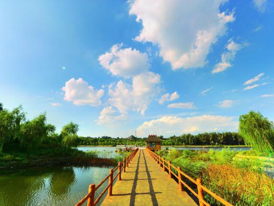 山西孝河國家濕地公園