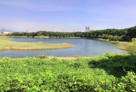 Osaka Nankou Bird Sanctuary