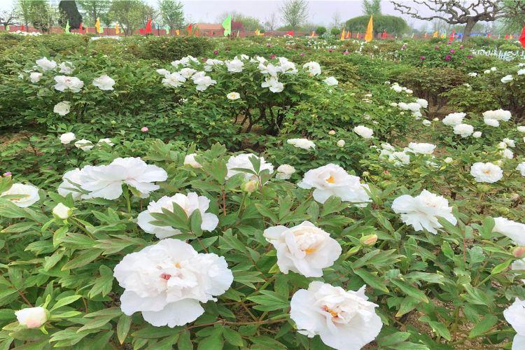 Caozhou Bai Garden4
