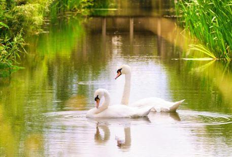 倫敦濕地公園