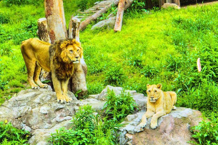 윤고르 동물원1