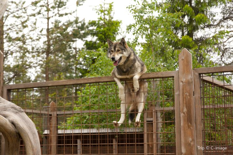 雪橇狗公園2