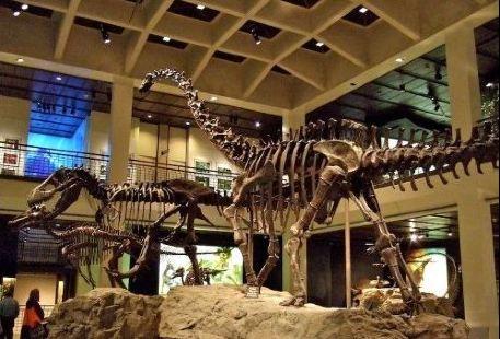 休斯頓自然科學博物館