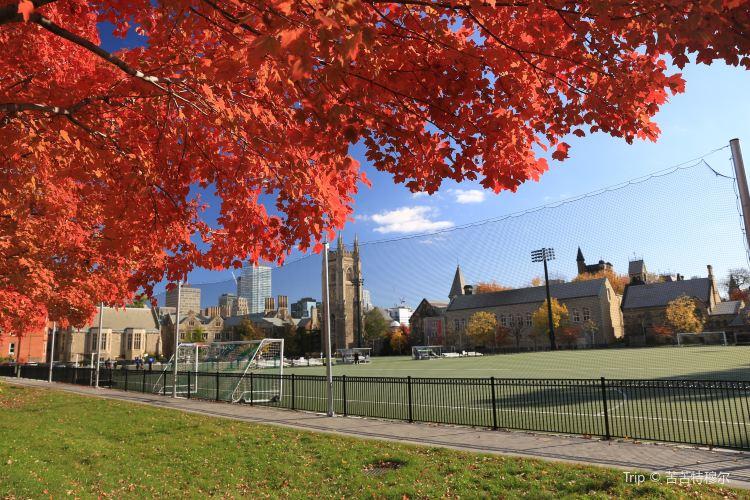 University of Toronto2