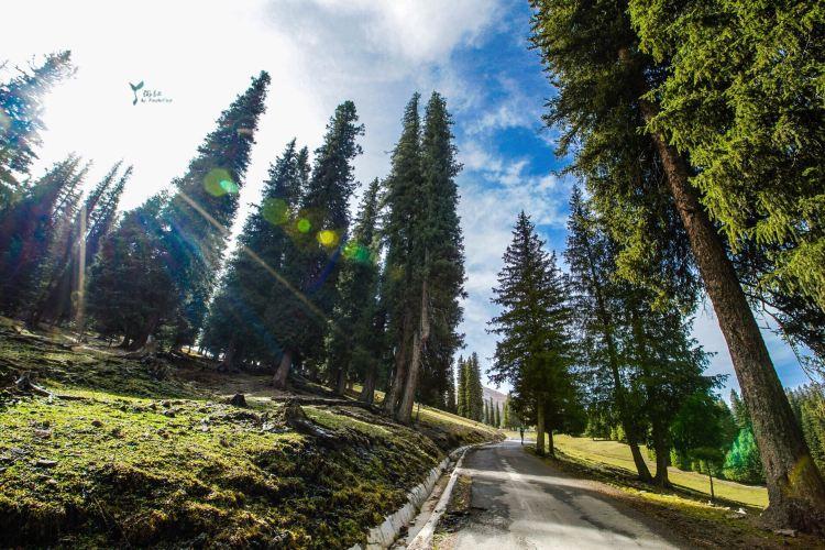 那拉提国家森林公園2