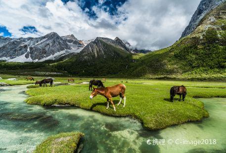 Luorong Pasture