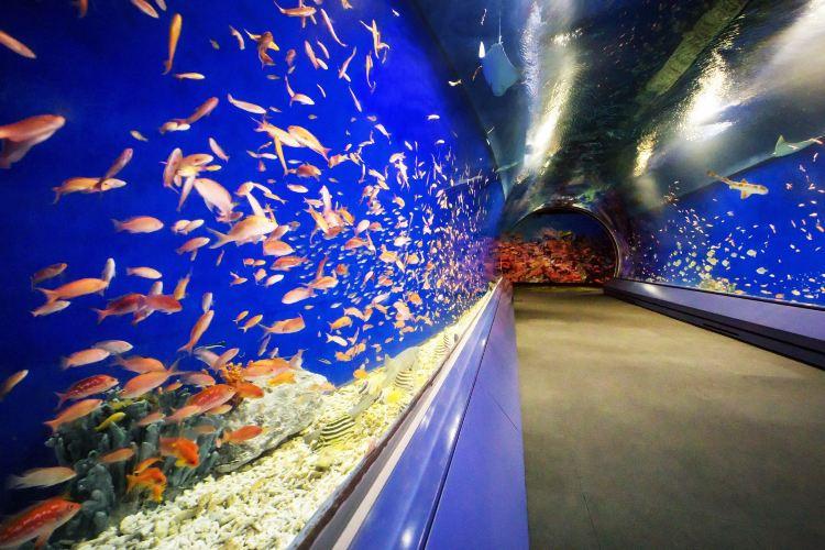 Osaka Aquarium Kaiyukan4